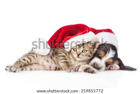basset hound puppy and tiny kitten in red santa hat. isolated on white background - stock photo