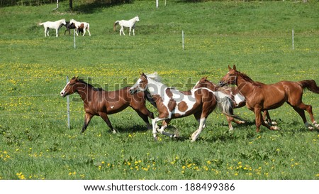 Batch of beautiful horses running on spring pasturage