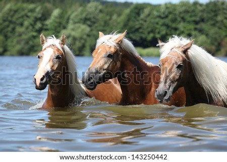 Batch of blond chestnut horses swimming in water - stock photo
