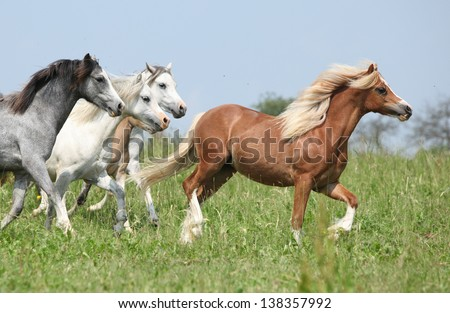 Batch of horses with chestnut one in the lead running on pasturage