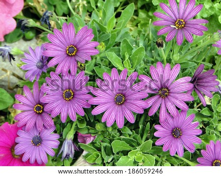 Batch of Purple Flowers - stock photo