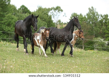 Batch of small and big horses running on pasturage in summer