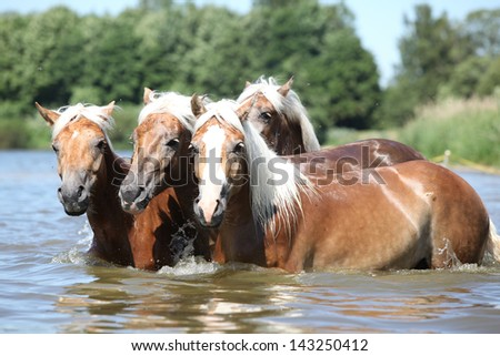 Batch of young chestnut horses in the water - stock photo