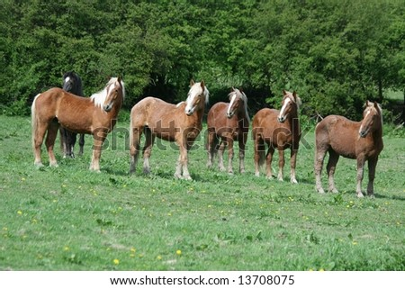 Batch of young horses