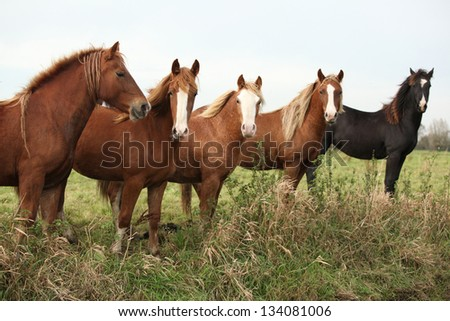 Batch of young ponnies looking on autumn pasturage - stock photo