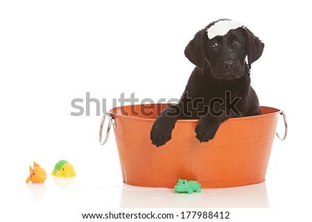 Bath time! - stock photo