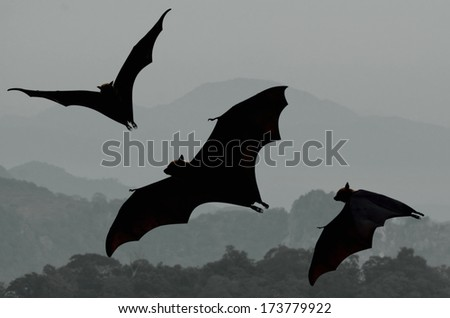 Bats flying at sunset - stock photo