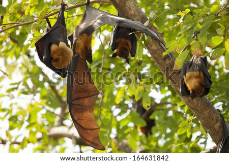 Bats in the trees.