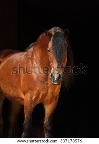 Bay heavy draft horse against a dark stable background - stock photo