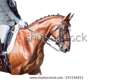 Bay horse: dressage - with clipping path - stock photo