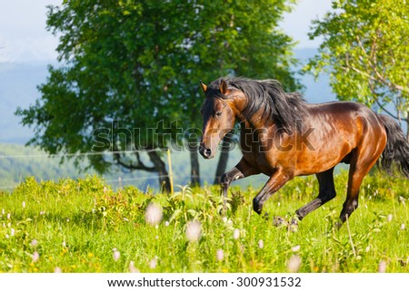 bay horse jumps on a green meadow in summer day - stock photo