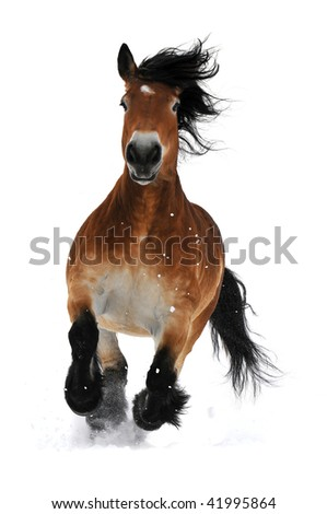 bay horse run gallop on the snow isolated on white - stock photo