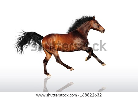 Bay horse running on a white background reflection