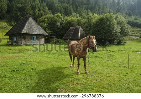Bay horse with harness in traditional Ukraine style grazes in the mountains  - stock photo