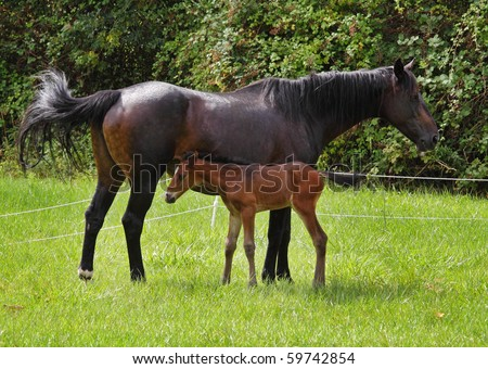 Newly Born Bay Horse With Her Newly Born