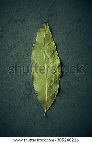 Bay Leaf - stock photo