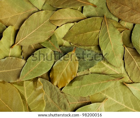 bay leaves closeup
