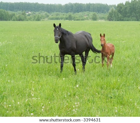 Bay mare and foal grazing in a bright green pasture - stock photo