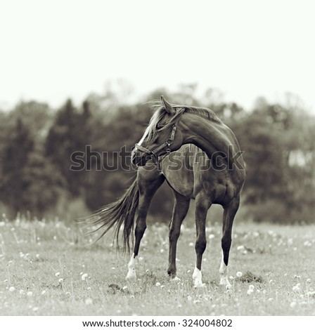 Bay mare in a meadow