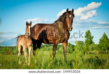 Bay mare standing with foal in summer field - stock photo