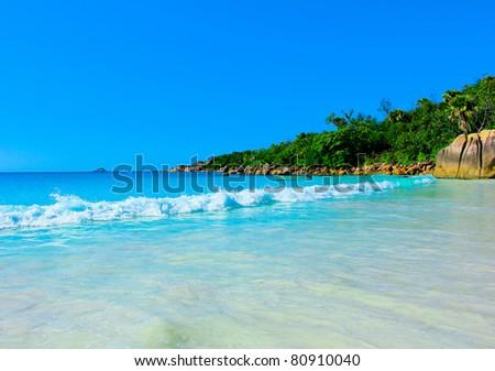 Bay Shore Jungle - stock photo