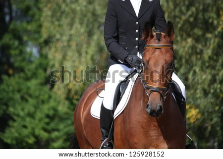 Bay sport horse portrait during dressage competition - stock photo