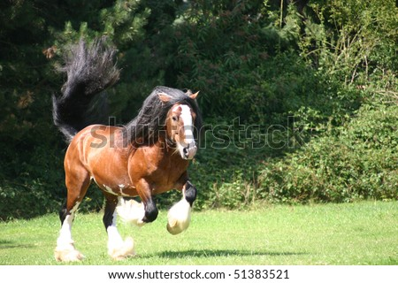 bay stallion in the pasture - stock photo