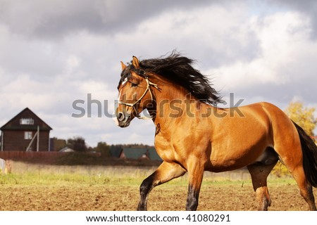 bay stallion on a stormy background - stock photo