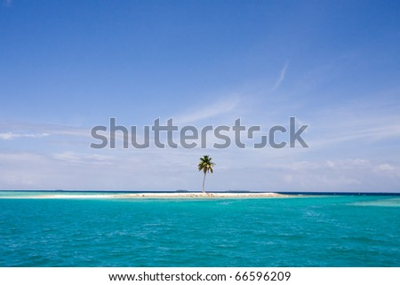Be single palm in a ocean - stock photo