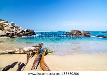 Beach and driftwood in Tayrona National Park near Santa Marta, Colombia - stock photo