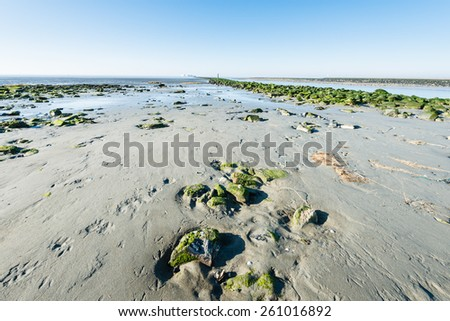 Beach at low tide from close next to a pier covered with green moss. - stock photo