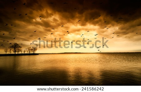Beach at Sunset and birds,after storm - stock photo