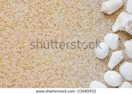 Beach background with sand and sea shells - stock photo