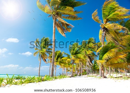 Beach. Caribbean Beach.Mexico.Paradise Island.Vacation and Tourism concept.Sun and Palms - stock photo