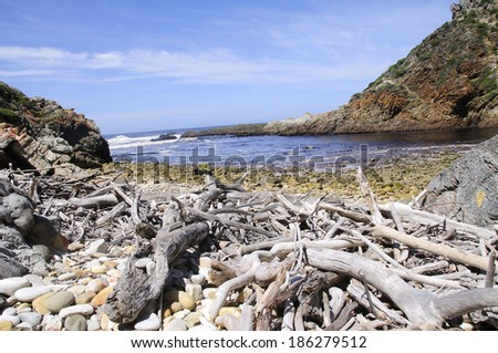 Beach covered in driftwood and sea stones on the Otter Hiking Trail - stock photo