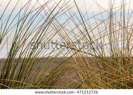 beach detail grass