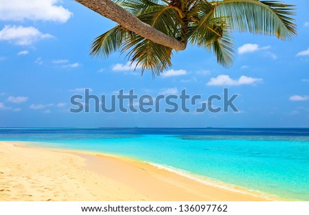Beach for relax under the shade of a palm tree - stock photo
