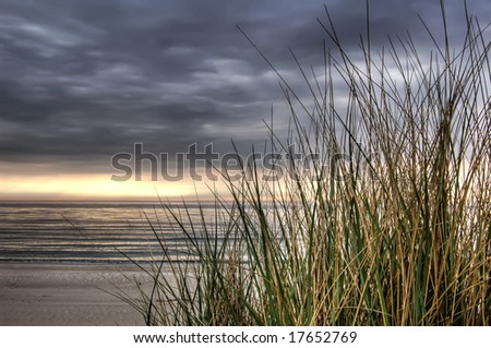 beach grass at sunset, calm before the storm - stock photo