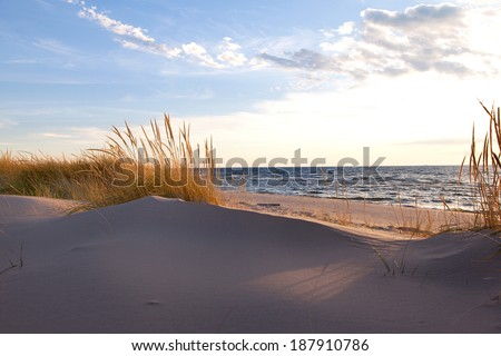 Beach Grass on Shoreline. Gold hued dune grass reflects the late day sun on the Lake Michigan shoreline - stock photo