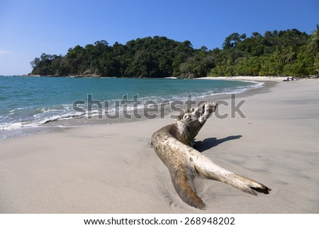 beach in the manuel antonio national park - stock photo