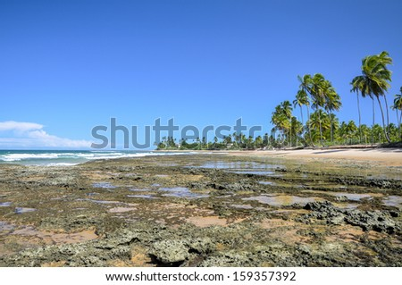 Beach of Taipu de Fora at low tide with cliffs (Bahia, Brazil)