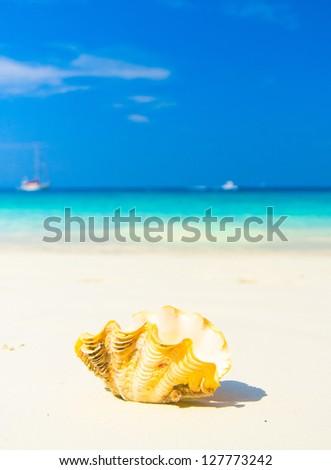 Beach Pearl Seascape Divine - stock photo