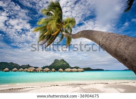 beach resort in bora bora lagoon waters with hanging palm tree - stock photo
