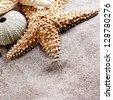 beach sand, shell and starfish - stock photo
