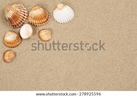 Beach scene in summer holiday with sand, sea shells on vacation and copyspace - stock photo