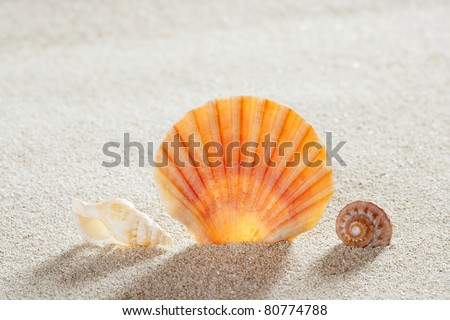 beach shell and snail in white sand like a summer vacation background - stock photo