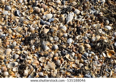 Beach Shells at the ocean surf background