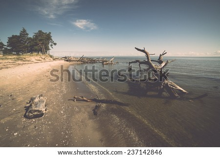 beach skyline with old tree trunks in water and blue sky - retro, vintage style look