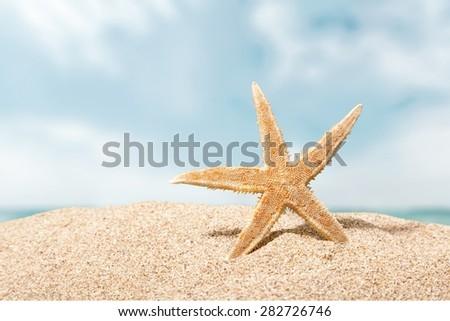 Beach, starfish, caribbean. - stock photo