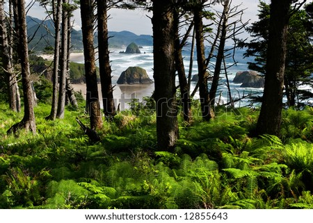 Beach Through the Trees - stock photo